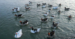 Dere Tepe Duzzz - ATV Safari - ATV Riding & Nature Tours - Avanos