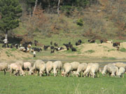 Dere Tepe Duzzz - ATV Safari - ATV Riding & Nature Tours - Aglan Pond