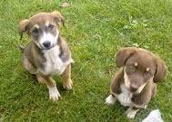 Dere Tepe Duzzz - ATV Safari - ATV Riding & Nature Tours - Gonul Sofrasi