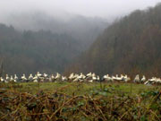 Dere Tepe Duzzz - ATV Safari - ATV Riding & Nature Tours - Ikramiye