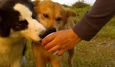 Dere Tepe Duzzz - ATV Safari - ATV Riding & Nature Tours - Iznik Camp