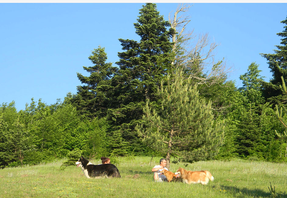 Sapanca Off-Road Games